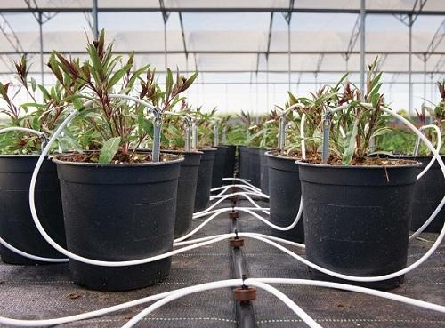 Hệ thống tưới nước tưới cây nhỏ giọt tự động giá rẻ rau