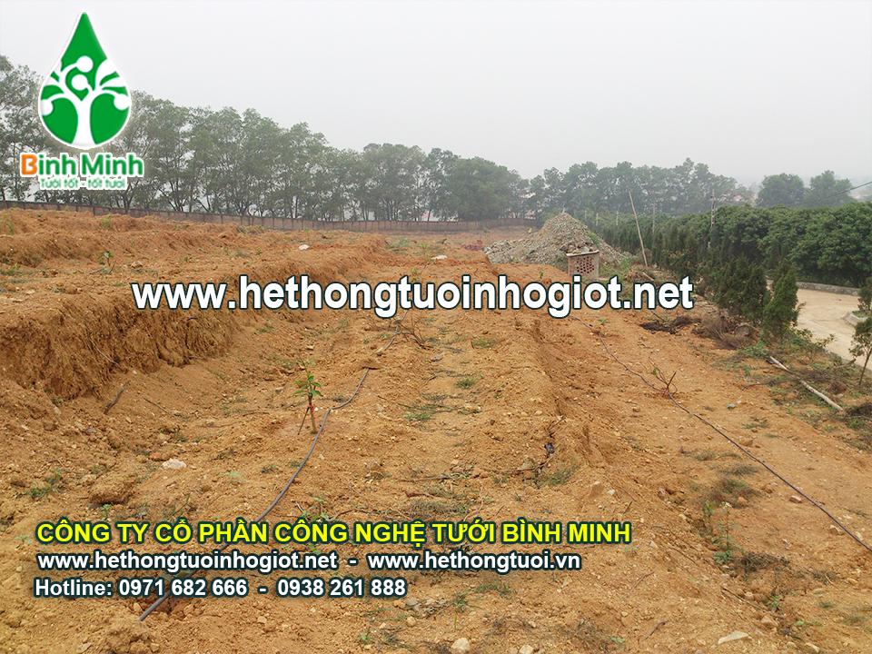 Dự án 15 ha bưởi tại Vĩnh Yên