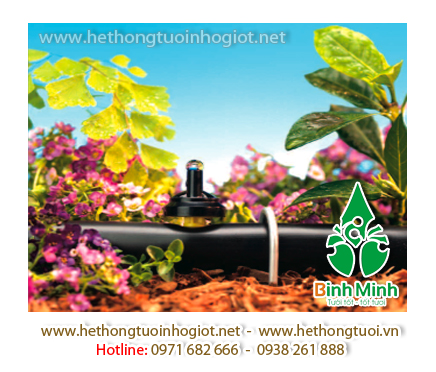 tưới nhỏ giọt, mô hình tưới nhỏ giọt, hệ thống tưới nhỏ giọt cho cây bưởi, cách làm hệ thống tưới nhỏ giọt